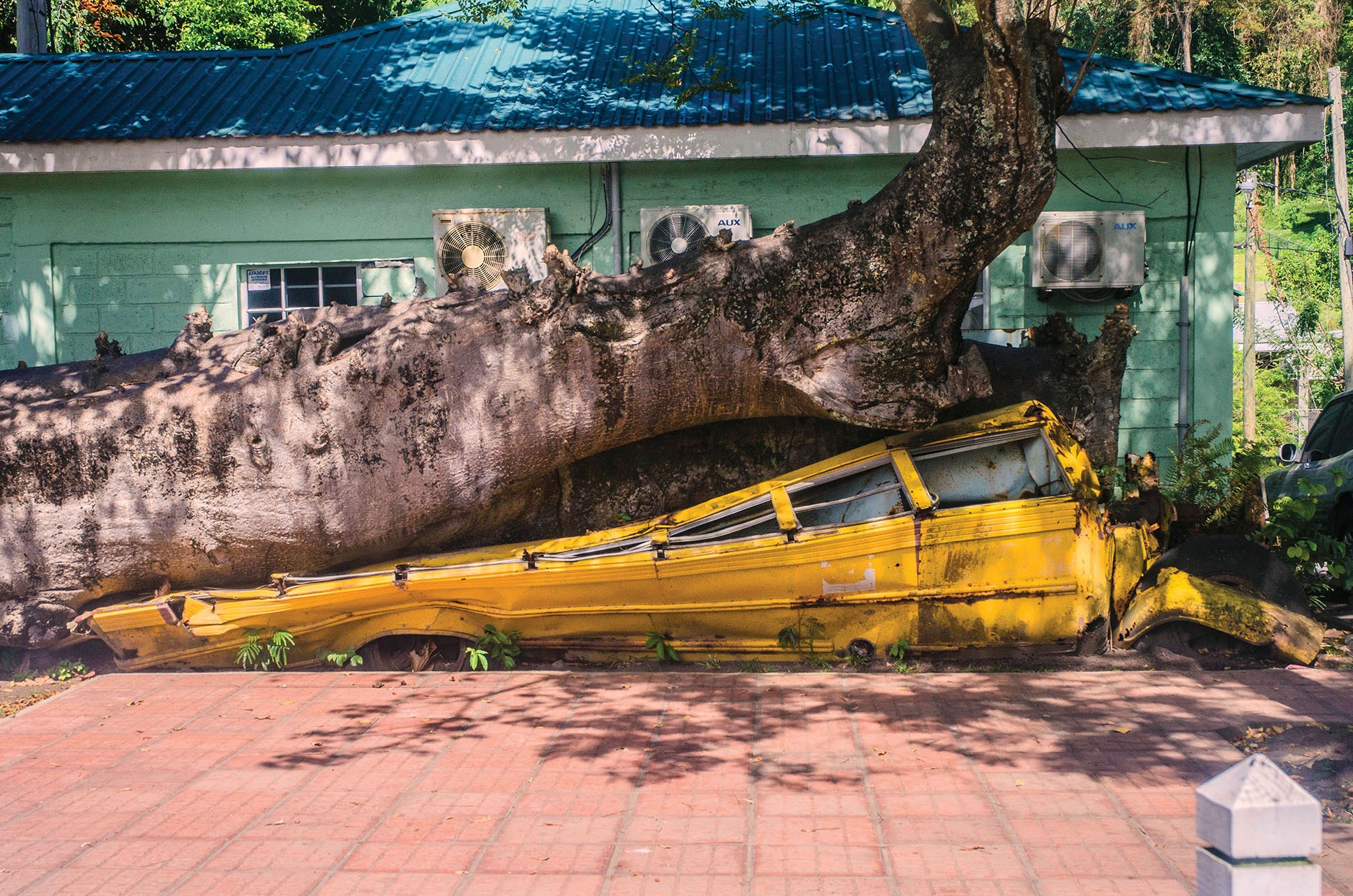A tree grows through a crushed schoolbus from Hurricane David (1979), which remains as a memorial on the island of Dominica. (Photo by Wayne Hsieh.)