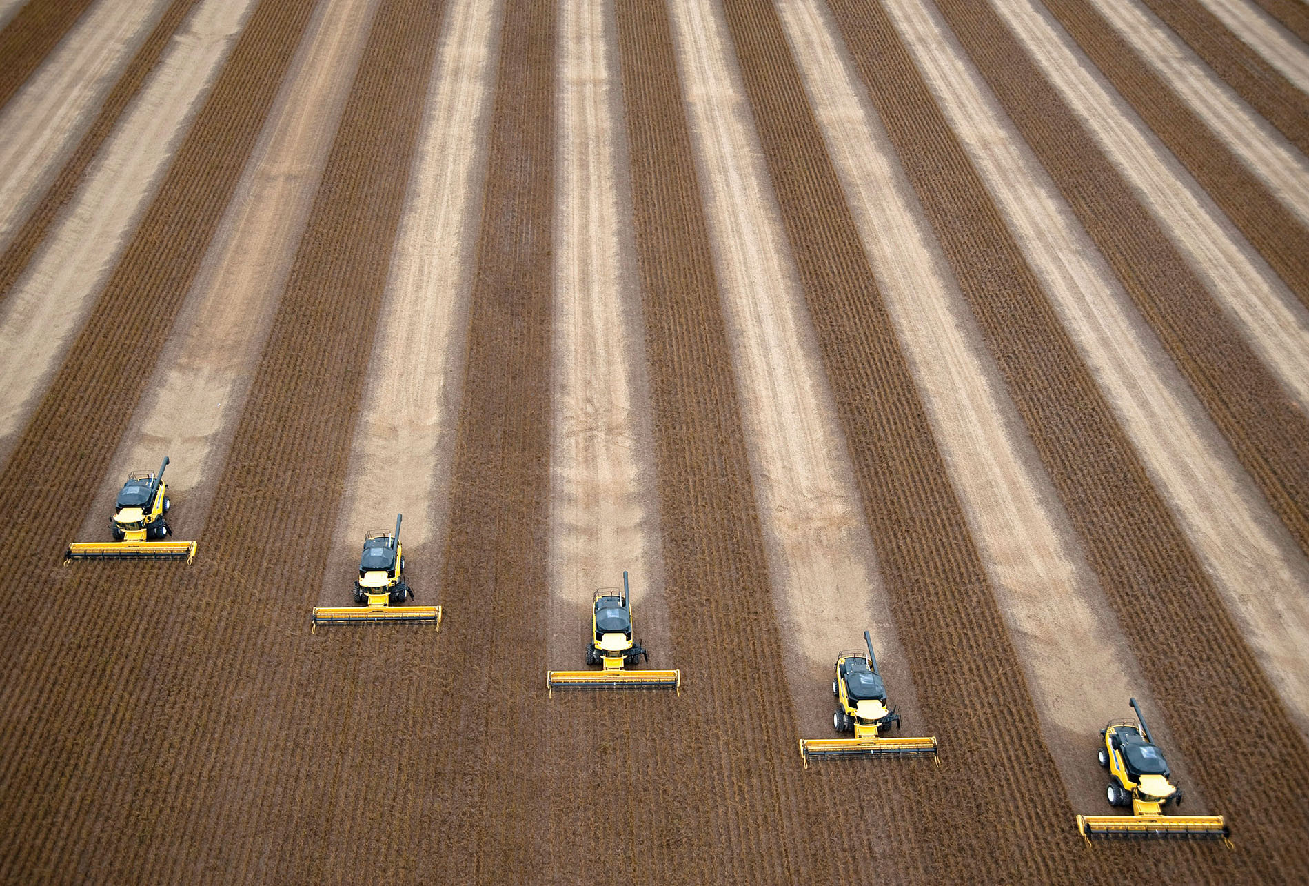 An overhead shot of 5 huge combine harvesters working a field of soybeans in Correntina, Brazil. (Photo from Getty Images.)