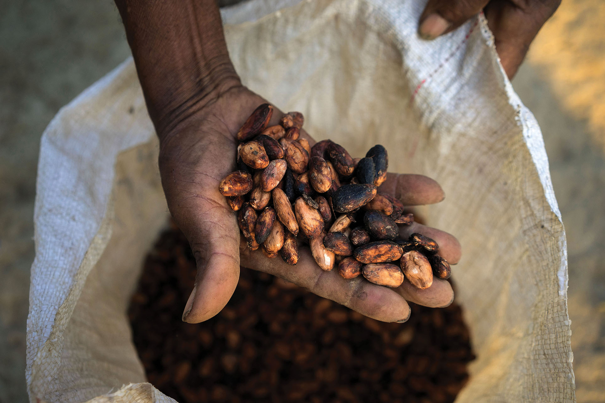 A farmer holds dried cacao beans ready for the market. (Photo courtesy of USAID_IMAGES.)