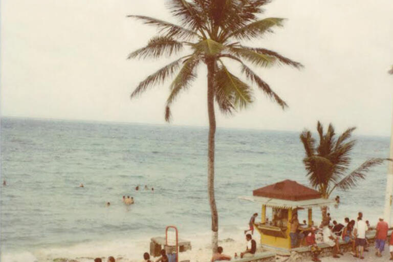 Image from the cover of No Dar Papaya, a picture of a palm tree on the beach