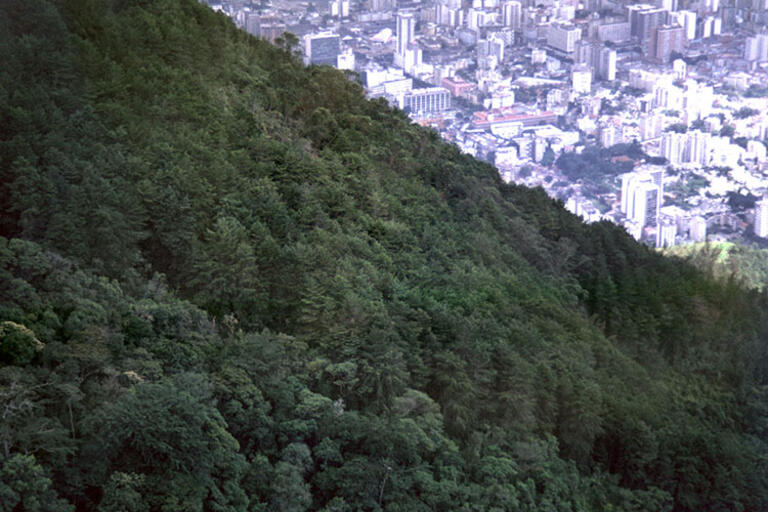 The city of Caracas, Venezuela looms behind a forested hillside
