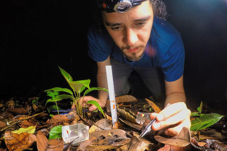 Ignacio Escalante studies insects during a CLAS-supported research trip in Panama, 2016. in