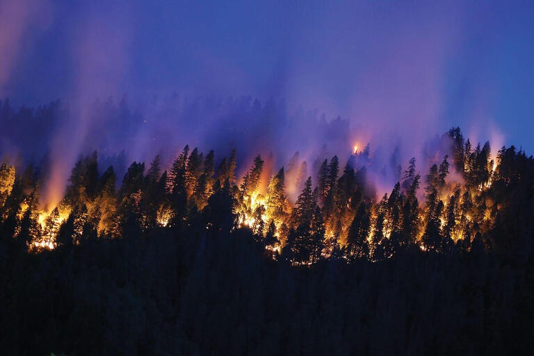 A line of pine trees on fire at dusk during the Happy Camp Fire in northern California, 2014. (Photo courtesy of the U.S. Forest Service.)