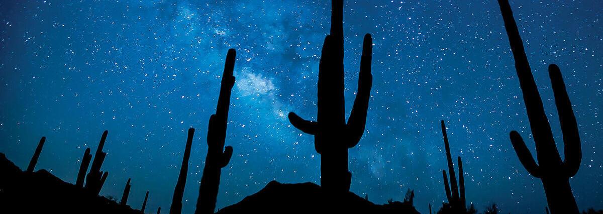 Night sky with cacti