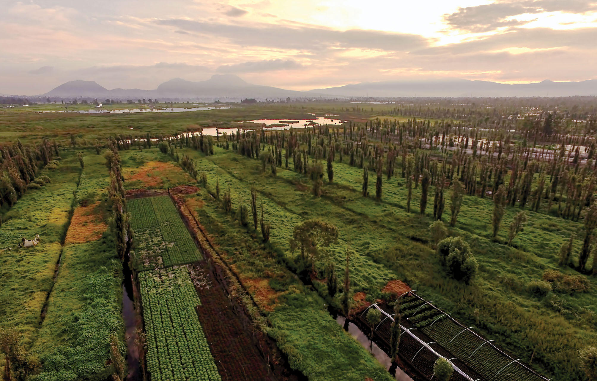 The urban sprawl of Mexico City replaced well-watered land that promotes agriculture in the chinampas of Xochimilco, whose fields are shown here in an aerial shot of green vegetation and canals, less than 15 miles away.  (Photo by Pablo Leautaud.)