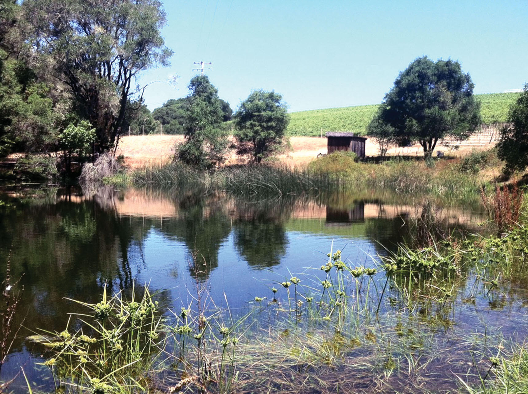 This reservoir at Husch Vineyards in Anderson Valley, California, is used to provide water during the dry season to prevent overreliance on the neighboring Navarro River. (Photo courtesy of Adina Merenlender.)