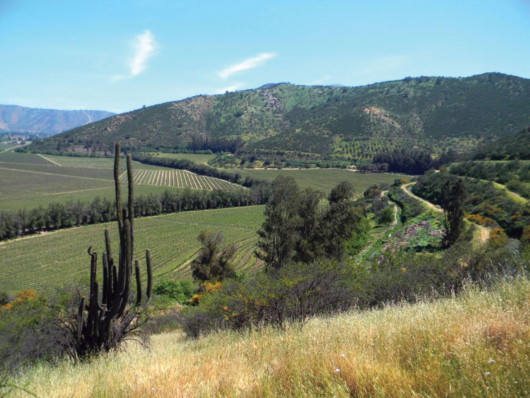 A hillside at Odfjell Vineyards in Maipo Valley, Chile, which adjoins 150 hectares of native shrublands  and forest currently under a restoration program focusing on degraded slopes. (Photo courtesy of Adina Merenlender.)