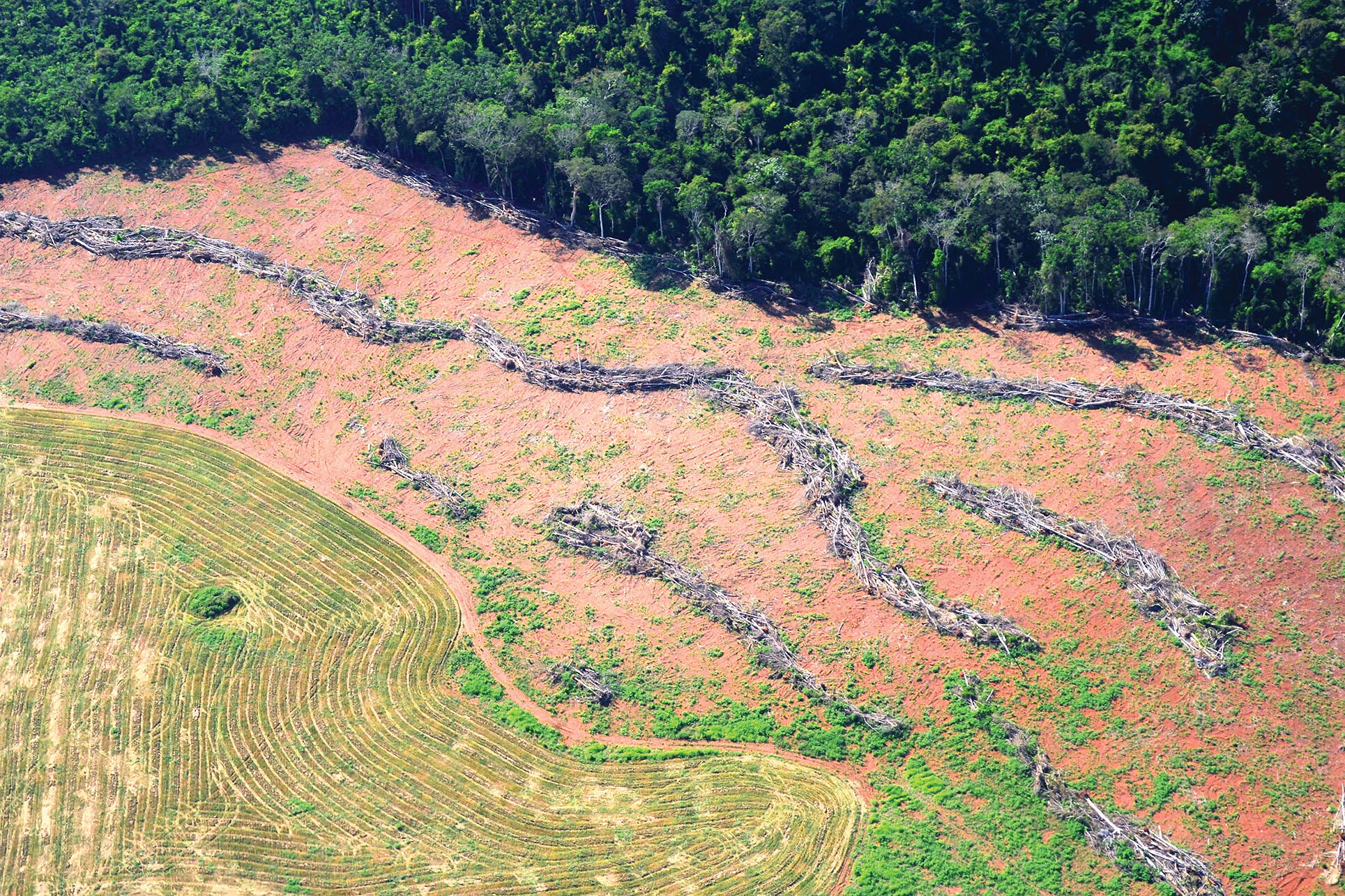President Bolsonaro says that protected areas in the Amazon hold up development. Above, deforestation in Novo Progresso, Pará, in 2014. (Photo by Vinícius Mendonça - Ascom/Ibama.)
