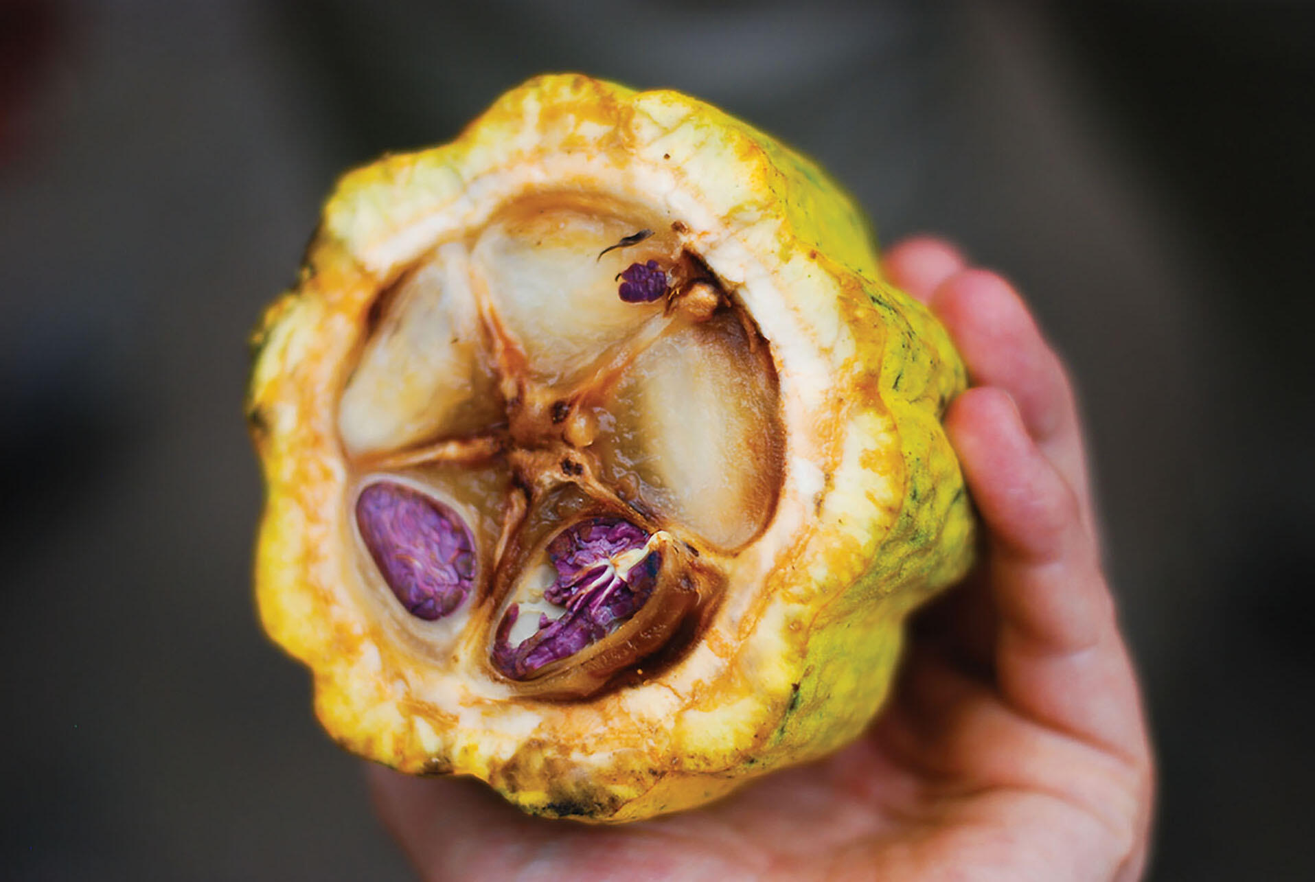 The inside detail of a cacao pod. (Photo by Everjean.)