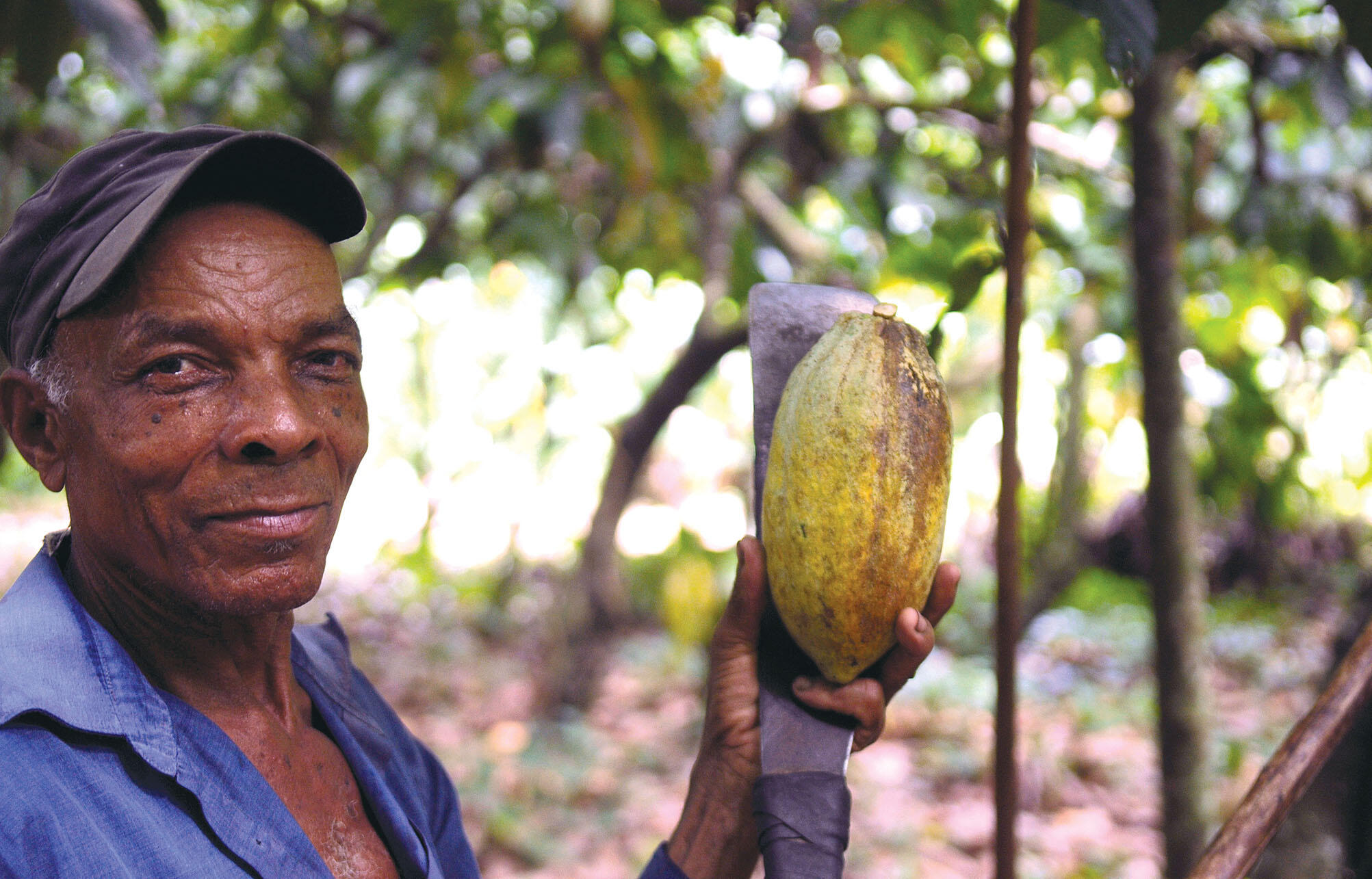 A farmer shows the inside detail of a cacao pod. (Photo by Everjean.)