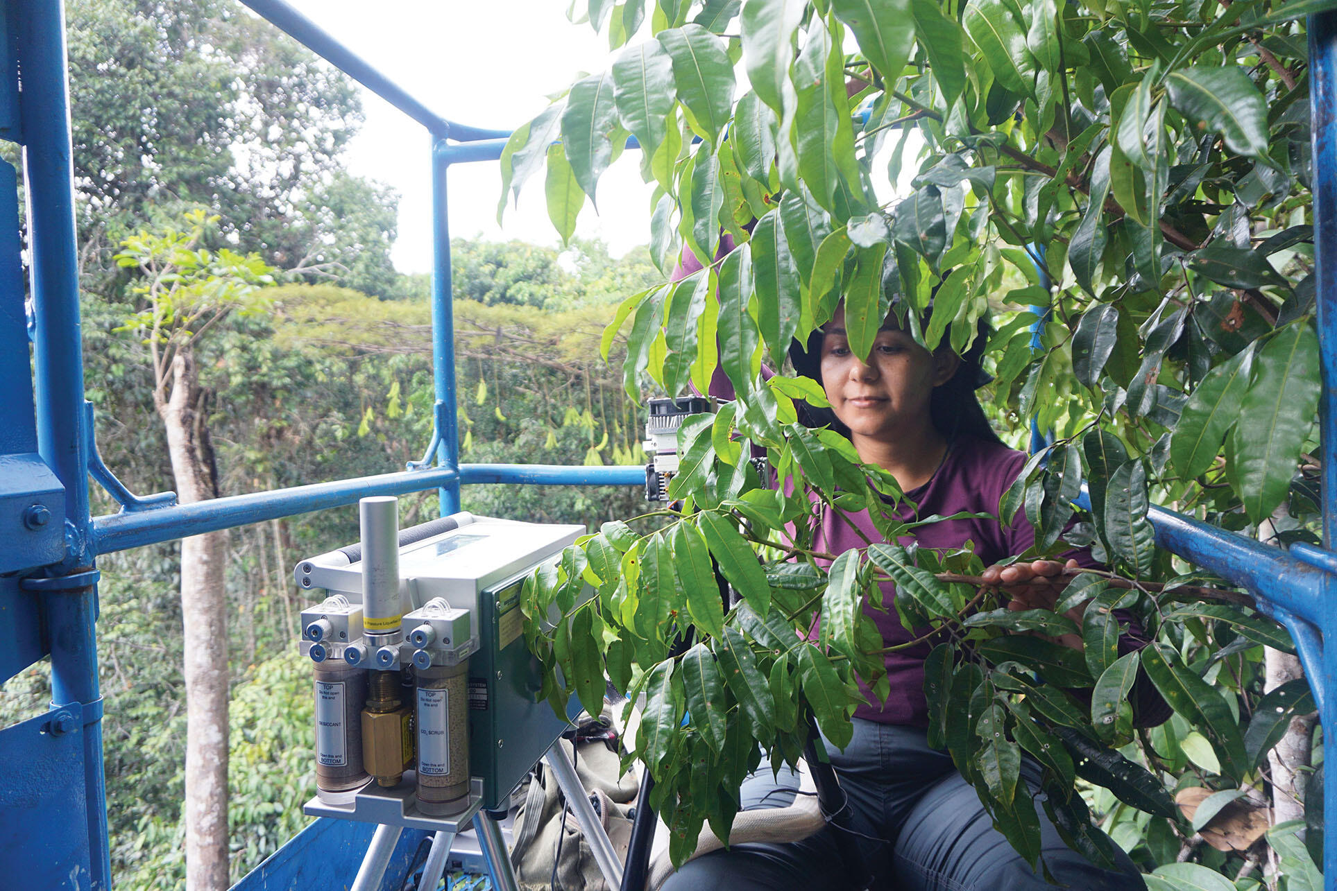 Graduate student Daisy Souza works in the lift basket among the leaves high in the rainforest canopy. (Photo courtesy of Bruno Oliva Gimenez.)