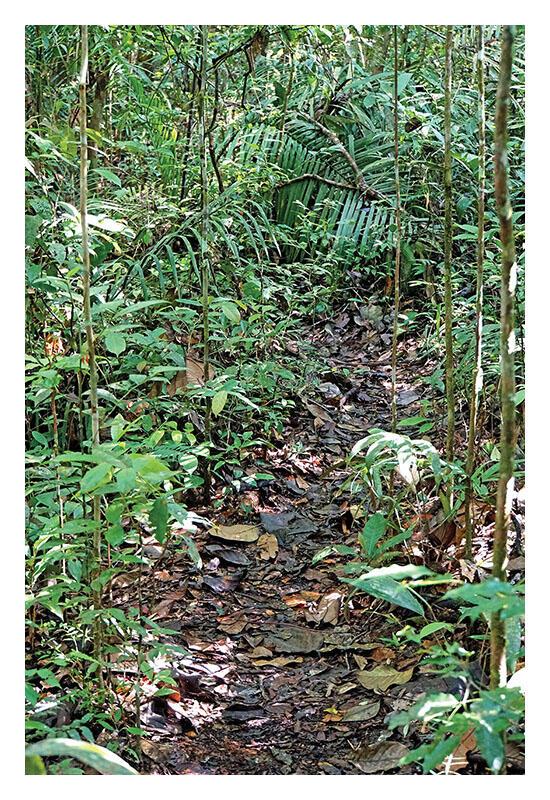 A leaf-strewn damp path through the Amazon rainforest near Manaus, Brazil. (Photo by Dennis Jarvis.)