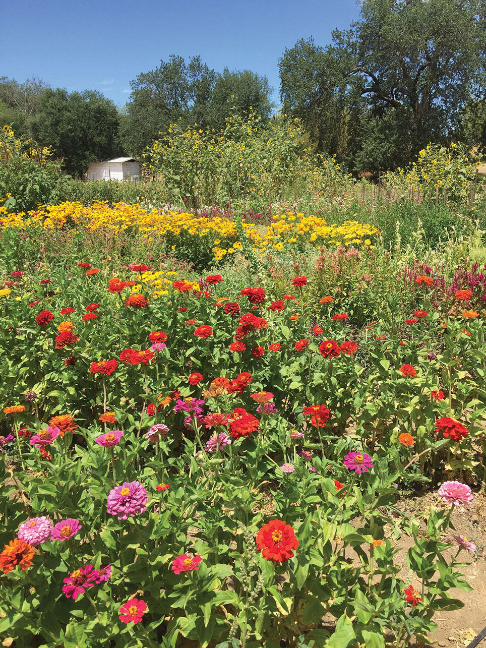 A colorful and diverse habitat garden provides an excellent environment for pollinating species. (Photo by Gordon Frankie.)