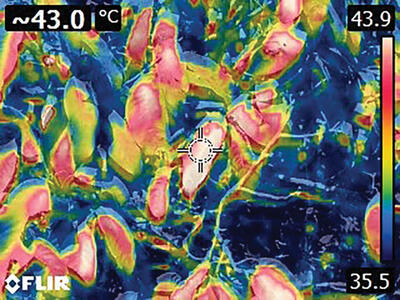 An infrared image ranging from red to blue shows temperatures in the forest canopy up to 109°F. (Photo courtesy of Jeff Chambers.)
